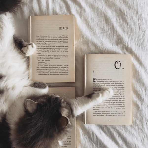Sumaiyya Reads