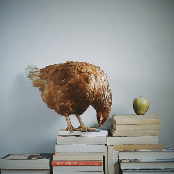 A Bookish Baker
